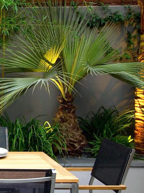 Large Potted Plants Outdoor
