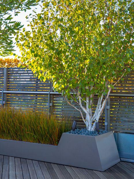 Architectural Garden Design London Mylandscapes Modern