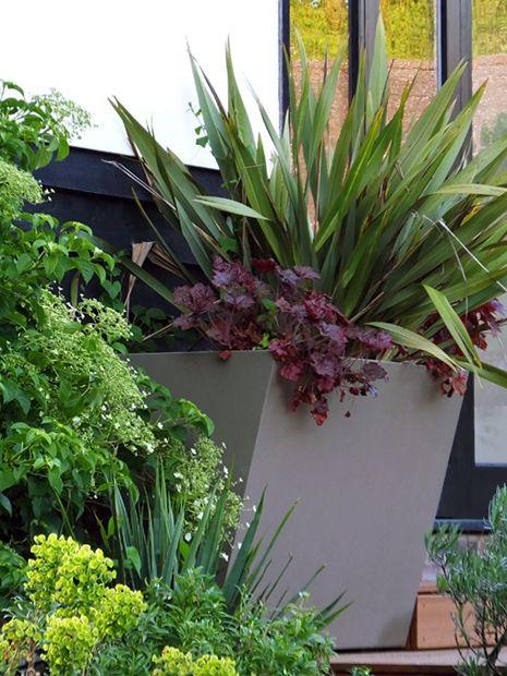 Yucca Garden Ideas 1