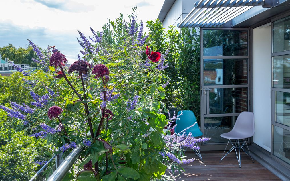 Roof Terrace Images Modern Rooftop Project Photos Mylandscapes