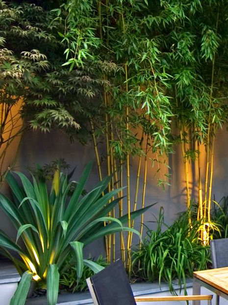 Tropical Garden Designs Modern Exotic Gardens London