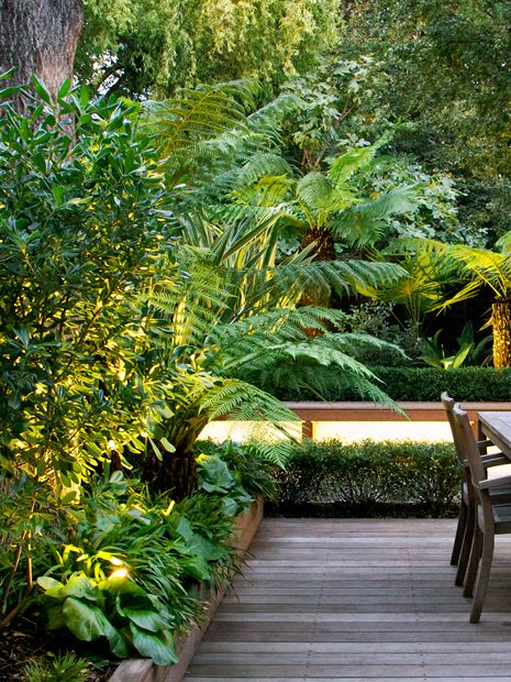 Tropical garden designs modern exotic outdoor space london for Jungle garden design ideas