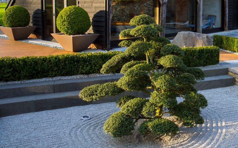 Hedging designs | Mylandscapes modern garden landscape ...