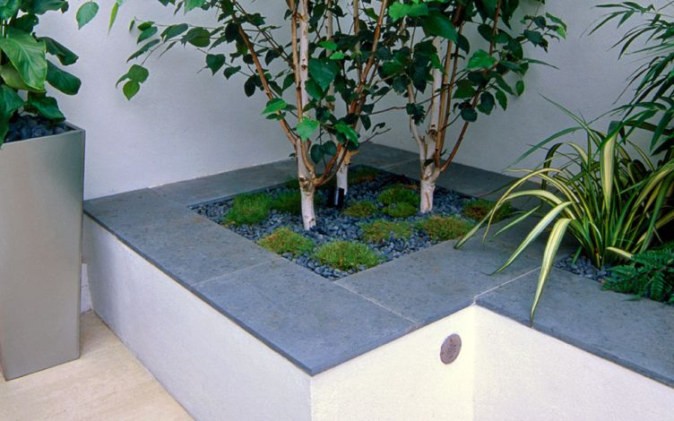 architectural shade planting small garden ideas