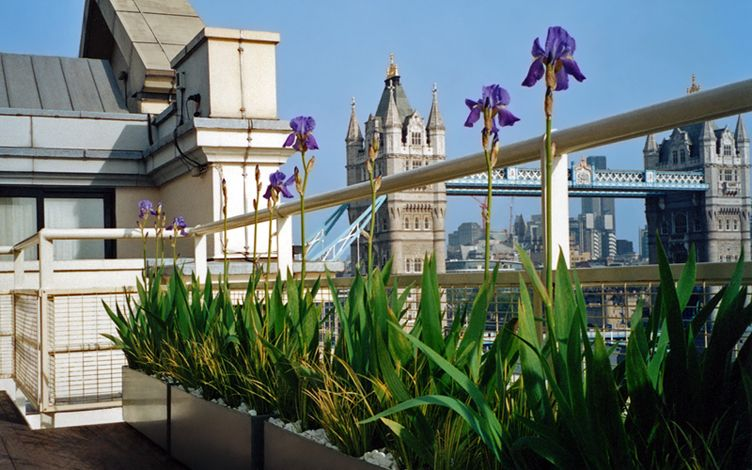 roof terrace view tower bridge