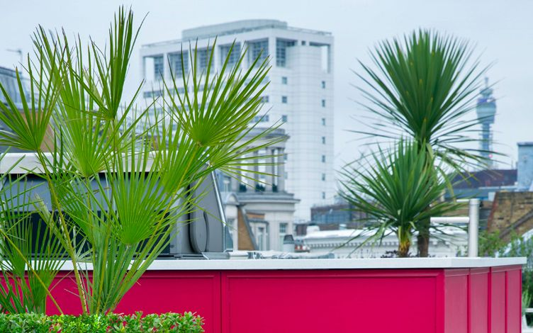 roof terrace palm trees