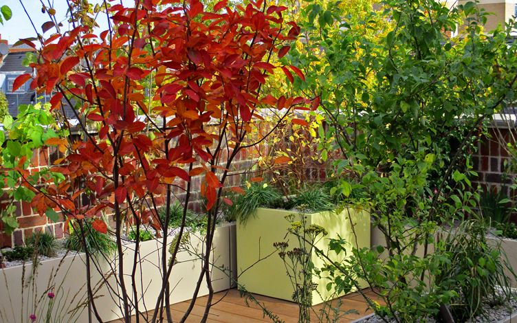 striking autumn colours modern garden planting