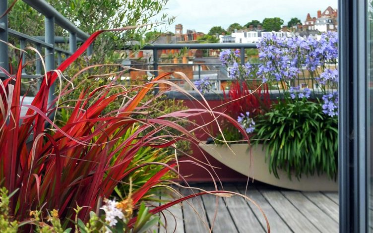 roof terrace late summer plants
