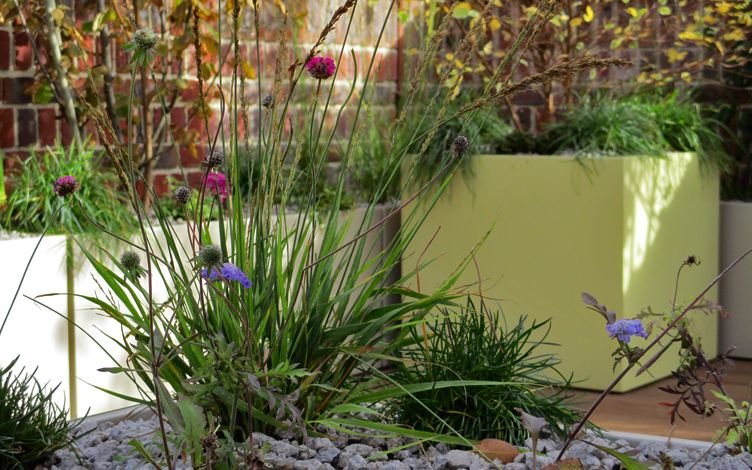 dainty native plants modern garden