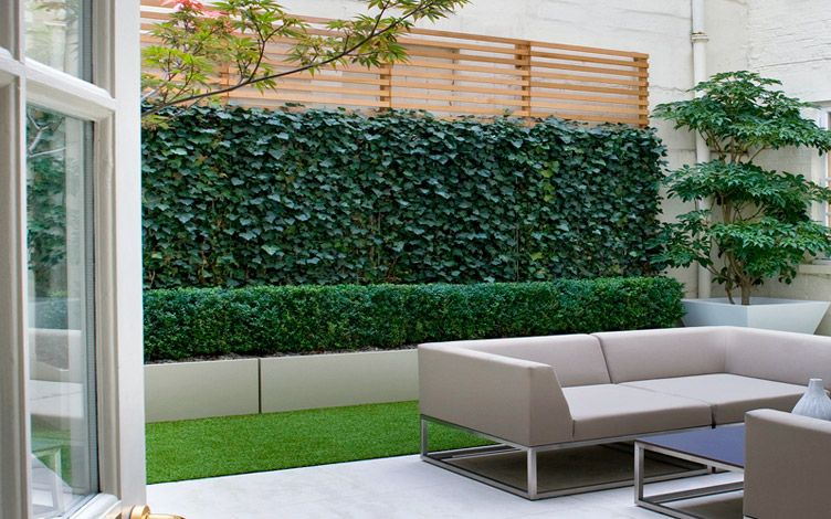london courtyard garden structural planting