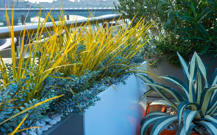 sunny roof terrace planting
