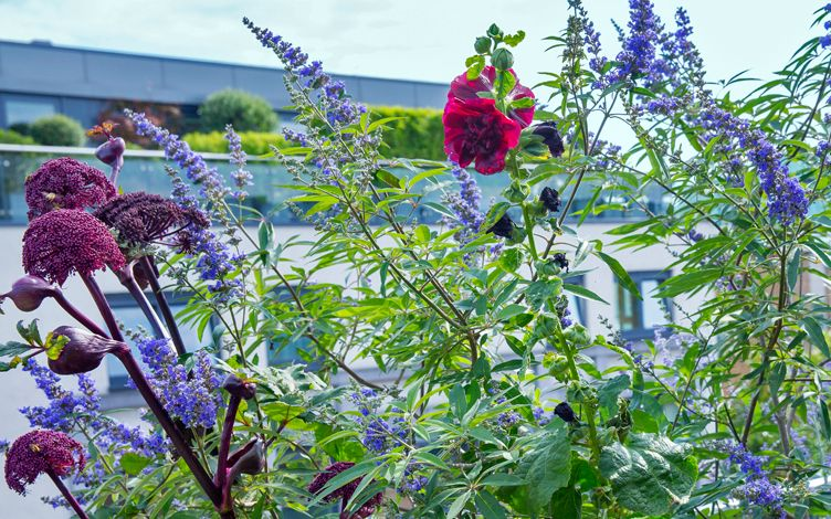 rooftop planting for wellbeing