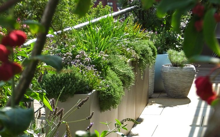 diverse sustainable contemporary garden planting design
