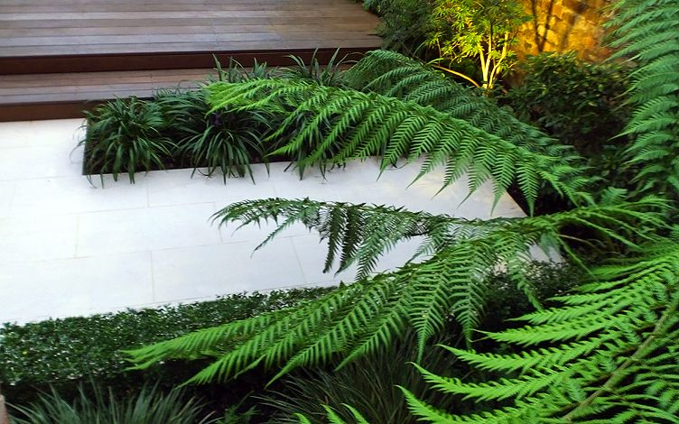 planting design with tree ferns